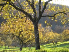 Herbst_12.JPG