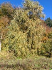 Herbst_14.jpg