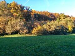 Herbst_4.jpg